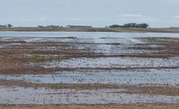 Desde del SIBER afirman que no es normal el exceso de agua en los suelos