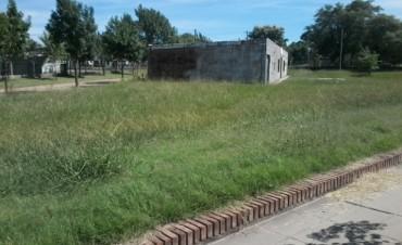 Preocupa a vecinos la falta de corte de pasto en terrenos baldíos