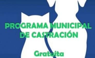 PROGRAMA DE CASTRACIÓN DE MASCOTAS