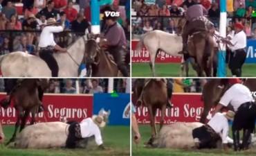 El negocio sin parar : Sacrificaron a un caballo que se accidentó en el Festival de Jesús María