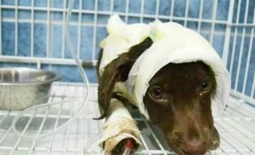 Para que tenga el peor de los finales : Un detenido por el brutal asesinato del perro Chocolate