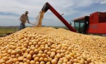 La soja llegó a su máximo valor histórico en Argentina
