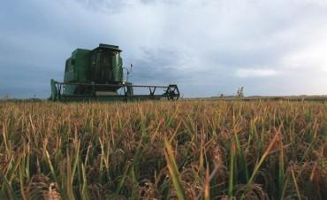 En Entre Ríos productores de arroz recibieron facturas de luz de hasta 300.000 pesos