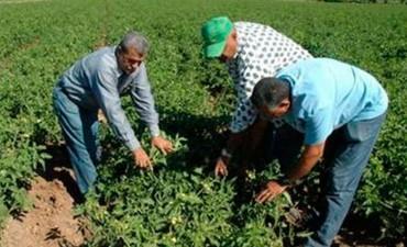 Monotributo Social Agropecuario: Continúa el reempadronamiento de familias