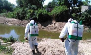 En Chajarí confirmaron el primer caso de Dengue autoctono