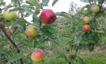 Frutas orgánicas: para comerlas mejor por el federalense Ruben