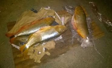 En operativos conjunto secuestran pescado y carne en mal estado