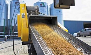 Denuncian vínculos entre Gobierno y agroquímicas que limitan la ley de semillas