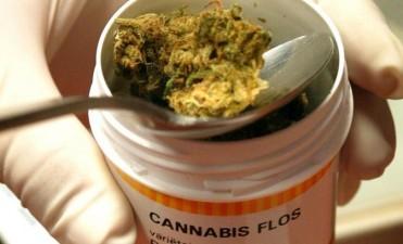 Argentina cerca de habilitar el uso medicinal de la marihuana