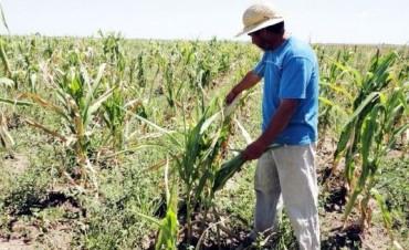 La emergencia agropecuaria será por seis meses y extendida a toda la provincia