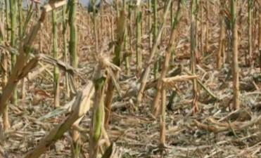 La Mesa de Enlace rechazó por insuficiente la propuesta de emergencia agropecuaria