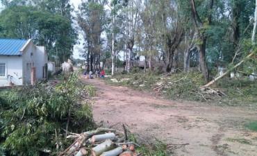 Carlos Schumacher se refirió al periodo de poda urbana y forestación