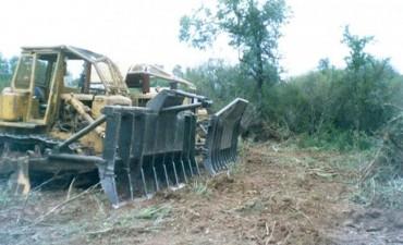 Confirman multa a la empresa Masnou por talar monte nativo en Sauce de Luna