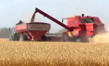 Argentina importará trigo por primera vez en 43 años