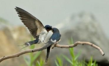 Un día para concientizar sobre la necesidad de proteger a las Aves Migratorias