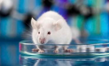 Más cerca de la cura: Logran eliminar el VIH en ratones con edición genética