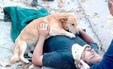 Conmovedor Se accidentó podando y su perro lo abrazó hasta la llegada de la ambulancia