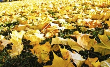 Pastos y hojas secas: Cuidado con la quema
