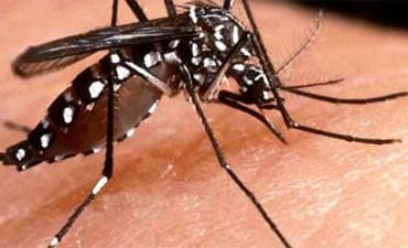 Haber sufrido dengue antes podría agravar infección por zika