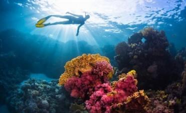 Peligro en el agua: descubren células cancerígenas en el mar
