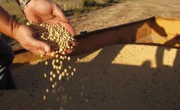 El estancamiento de la soja
