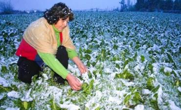 El día más frío en lo que va del año: Sensación térmica bajo cero en Entre Ríos