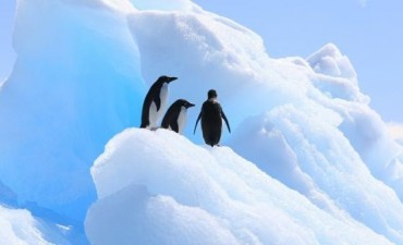 Los pingüinos de la Antártida podrían desaparecer debido al cambio climático