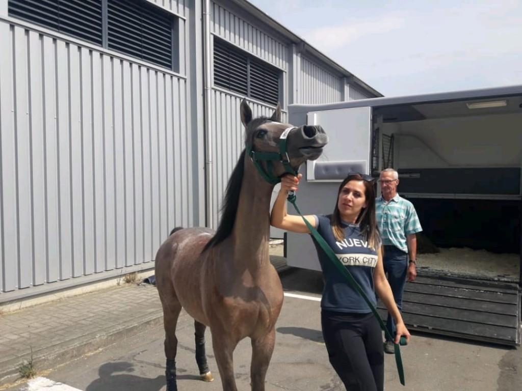 La pasión por los caballos llevó a hija de Concepción del Uruguay a Emiratos Árabes Unidos.