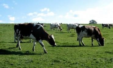 Las exportaciones de carne vacuna crecieron un 18% en junio