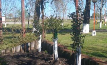 Trabajos y mantenimiento de espacios públicos en C. Bernardi