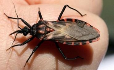 El mal de Chagas afecta a un millón y medio de argentinos