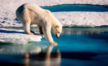 Calentamiento global: Los miedos de un oso en el Ártico