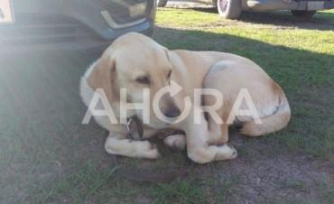 Roco, el perro que encontró el mega cargamento de marihuana