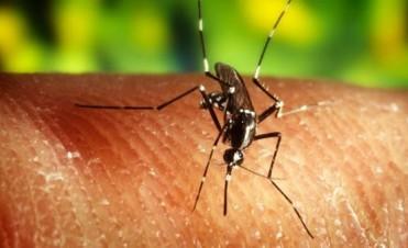 Por qué los mosquitos pican a algunas personas y a otras no