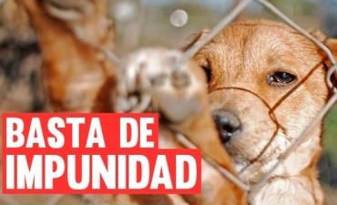 Proyecto del diputado Monge, propone la creación de  un área específica de protección animal en la Policía