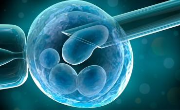 Limitarán edad para cobertura de tratamientos de fertilización asistida