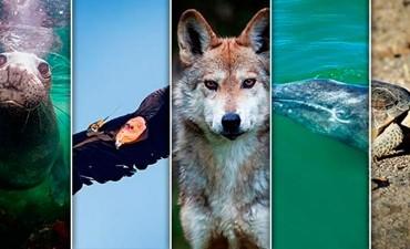 Aseguran que 55.000 especies desaparecerán antes de que termine el 2017