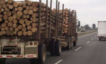 Transporte de productos forestales