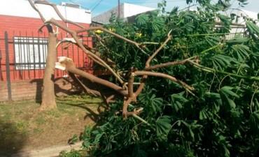 El fuerte temporal causó graves daños en ciudades entrerrianas