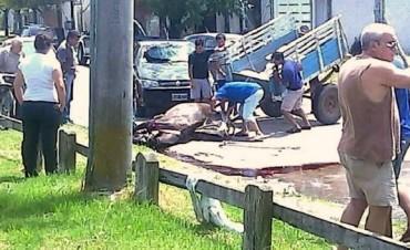 En Gualeguaychú murió degollada una yegua que tiraba de un carro
