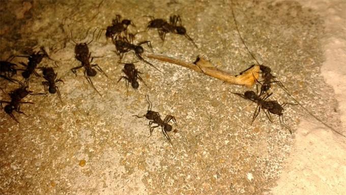 Más exacto que el Servicio Meteorológico: Predice el clima estudiando hormigas