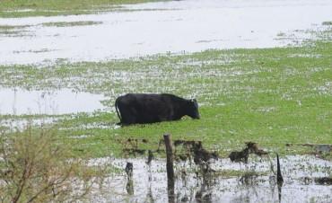 El mal uso agrícola del suelo agrava los efectos de las lluvias fuertes