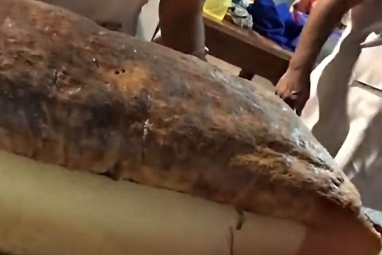 VIDEO: En Sauce de Luna elaboraron un pan casero de 3 metros de largo