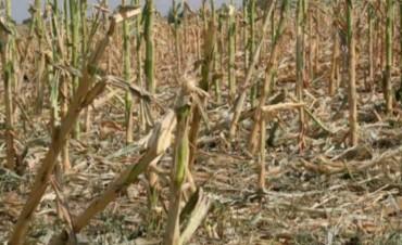 Avanza la sequía en Federal