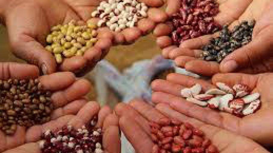 Se viene la polémica: Ley de semillas en un año electoral