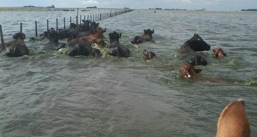 Advierten que las pérdidas por las inundaciones serán millonarias