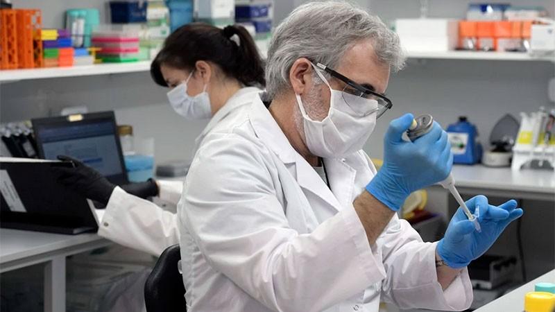 Coronavirus: tratamiento con suero equino estará disponible la semana que viene