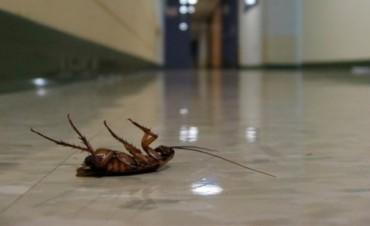 Prohíben el uso de un insecticida para el hogar