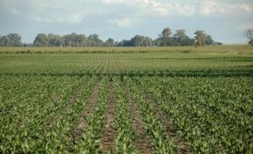 Tierras militares: licitarán otras 15.000 hectáreas para sembrar