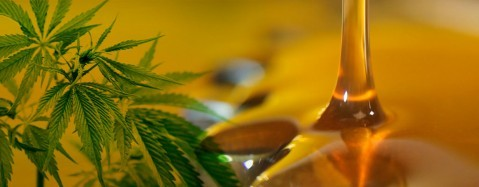 El Senado tiene la llave para que Entre Ríos adhiera a la Ley de investigación y uso medicinal de la planta de cannabis